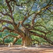 Grote kronkel boom